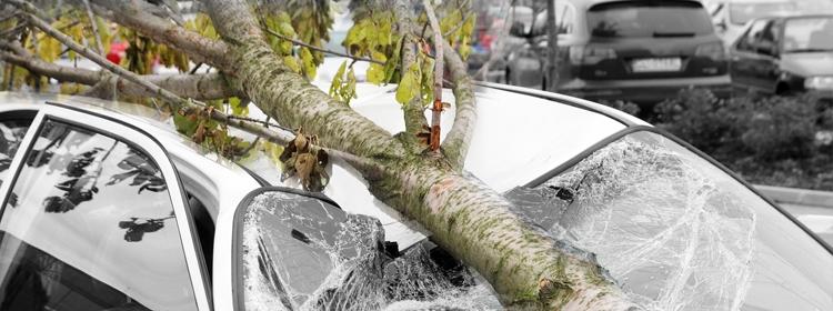 נזקי רכוש - עץ שנפל על אוטו